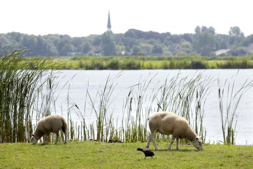 waterland met schapen en skyline